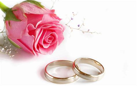 wallpaper couple with rose romantic pink rose and couple wedding rings hd wallpaper