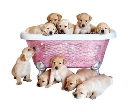 bathtub dog swarovski crystal dog bathtub grooming beauty posh