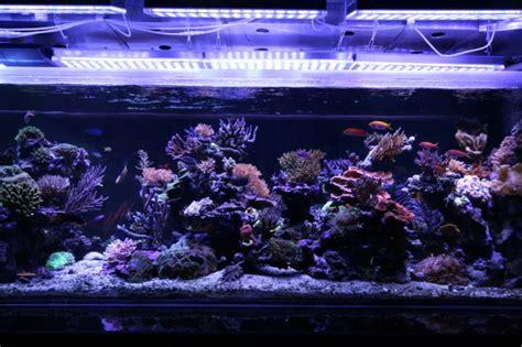 Reef Aquarium Lighting by Orphek Pr 156 Series Fixture Power Reef 156 Orphek Prlog