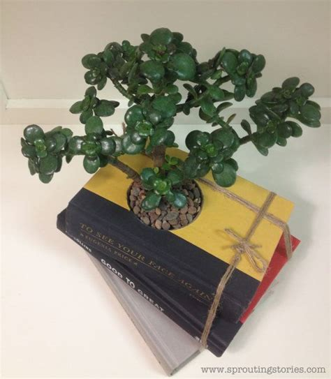 Book Planter by Book Planter For Succulents Diy Ready To Plant Vintage
