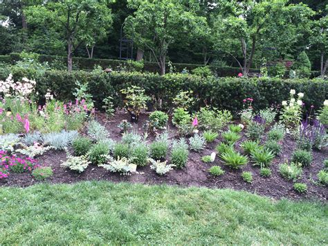 redesigning a perennial garden is bobbie s green thumb