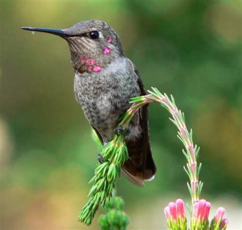 1000 images about birds that i love on pinterest