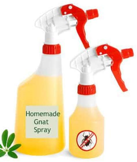 Home Remedies For Gnats by 20 Effective Home Remedies On How To Get Rid Of Gnats