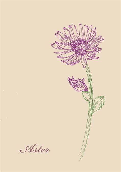 aster tattoo designs the 25 best ideas about aster flower tattoos on