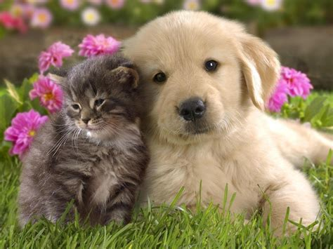 puppy and kitten puppies vs kittens images puppies and kittens hd wallpaper and background photos