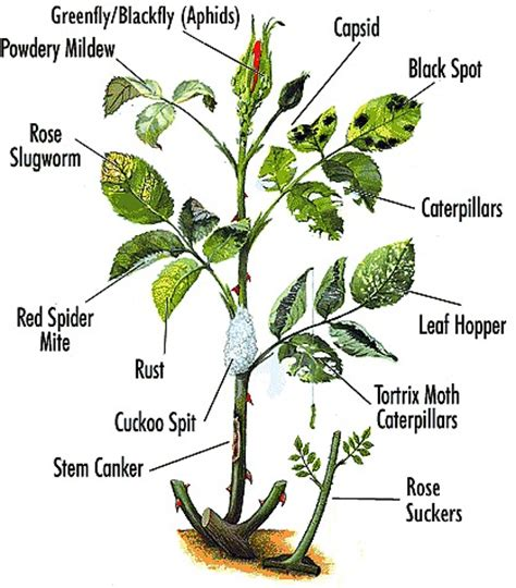 types of garden pests general precautions in all parts of the garden pests and