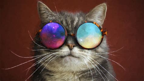 cat glasses party cool painting   hd wallpapers hd