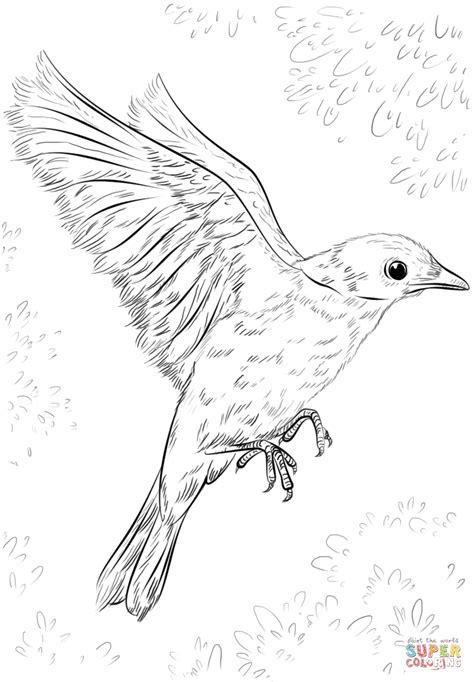 coloring pages of birds flying blue bird flying coloring page free printable coloring pages