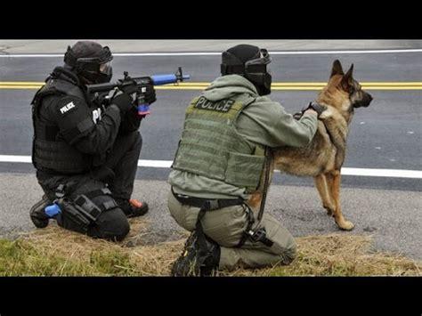 how to your like a k9 k 9 unit s w a t team special dogs k9