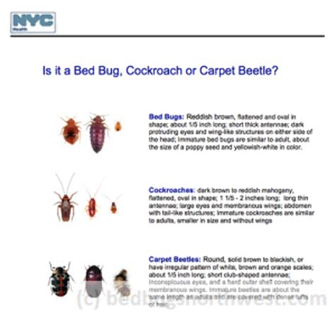 carpet beetles in bed carpet beetles or bed bugs bed bugs northwest