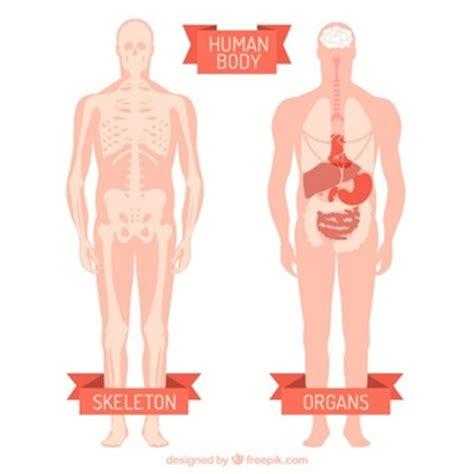 figura corpo umano organi interni fegato foto e vettori gratis