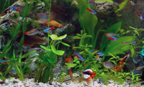 types of aquarium fish types of freshwater aquariums the aquarium setup filtration and maintenance site