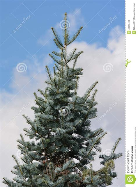 tree stock photo image 43874490