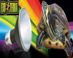 lada uvb per tartarughe d acqua articoli per tartarughe d acqua recensioni e consigli