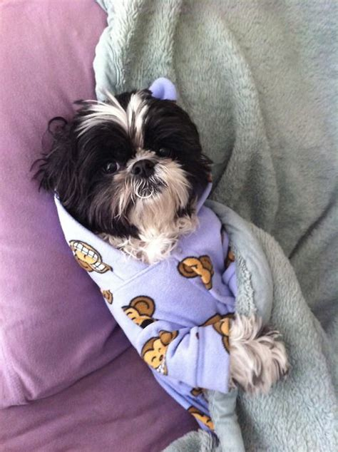 shih tzu pajamas 107 best images about adorable shih tzu s on puppys hair care products