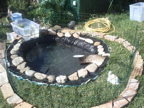 vasche per tartarughe d acqua dolce pin come costruire un laghetto su tartarughe on