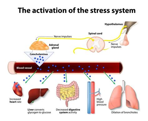 Can Stress Cause Blood In Your Stool by Why There S Blood In Your Stool And Next Steps Healevate