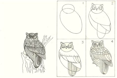 studentsdrawing animal step by step easy outline drawing