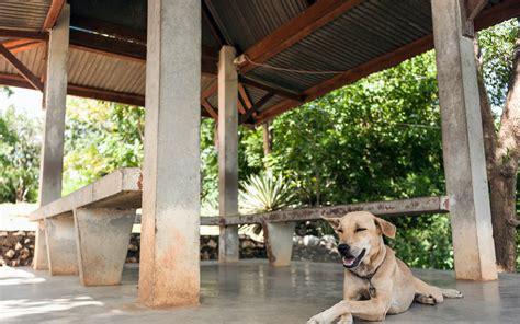 eliminare zecche dal giardino garantire la sicurezza dei cani in giardino oknoplast
