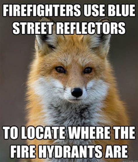 Fox Meme - fun fact fox meme fun