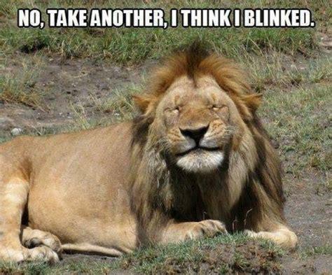 Lion Meme - funny lion picture
