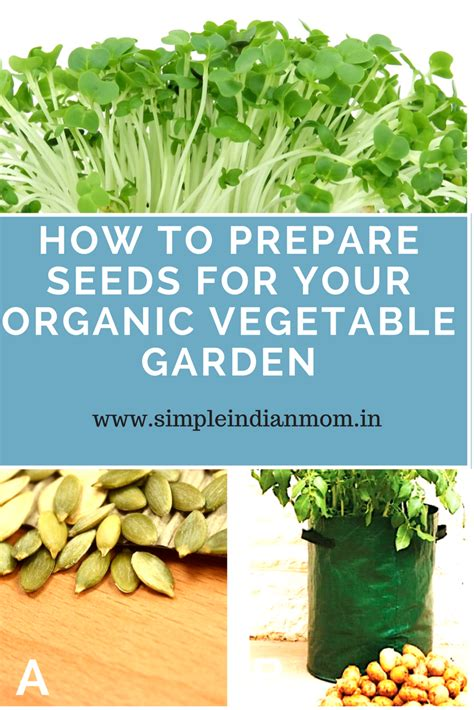How To Prepare Seeds For Your Organic Vegetable Garden How To Prepare A Vegetable Garden
