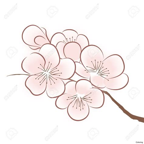 Easy To Draw Japanese Flowers by Flower Draw Easy How To Draw A Cherry