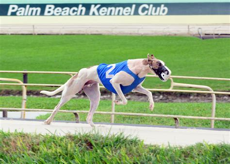 speed dogs trifecta tip when to bet on speed dogs