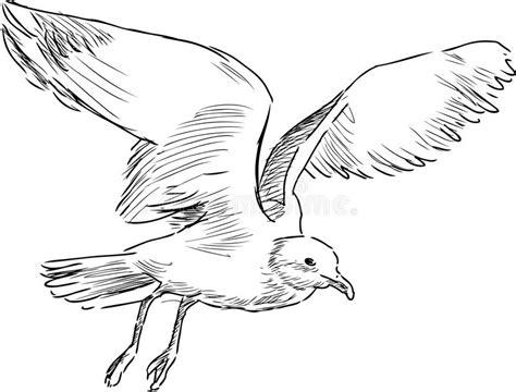 disegno gabbiano gabbiano di volo illustrazione vettoriale illustrazione