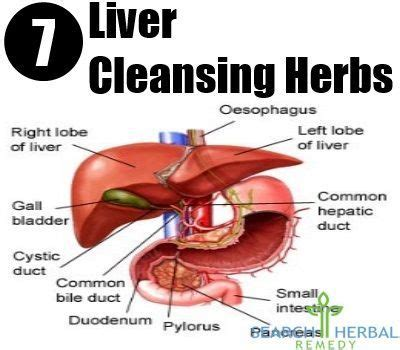 Liver And Gallbladder Detox Plan by 1000 Images About Liver Cleanse On