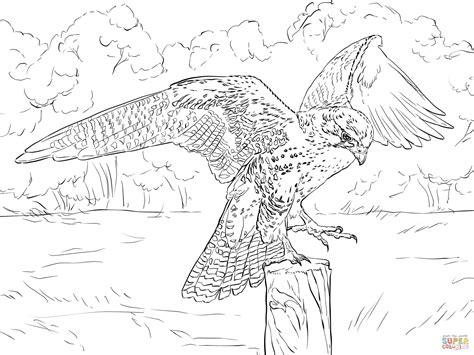 coloring page falcon bird peregrine falcon coloring sheets coloring coloring pages