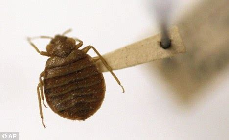 do bed bugs make you sick bedbug insecticides are more dangerous than bedbugs says