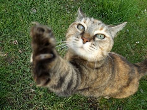 how to keep cats out of your backyard keep cats out of garden how to keep cats out of the