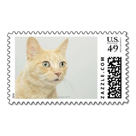 Cat Eye Chrysoberyl Cc3214 Memo 297 best images about cat postage sts on cats design your own and business card