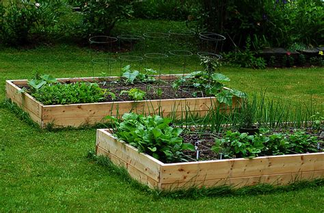 vasche per orto come realizzare un orto