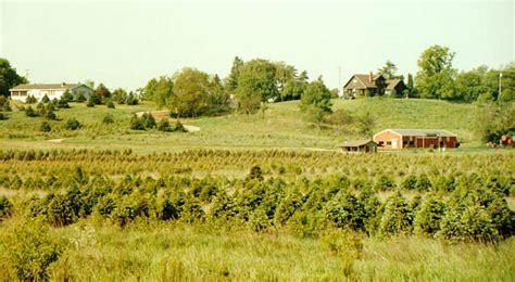 barrett family broadview christmas tree farm