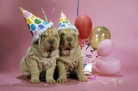 birthday puppies birthdays photos kathy licensing