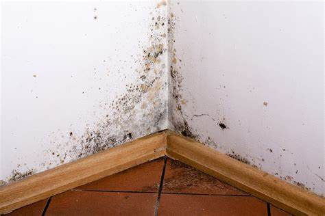 comment enlever de l humidité sur un mur 4231 what you need to about national mold awareness month