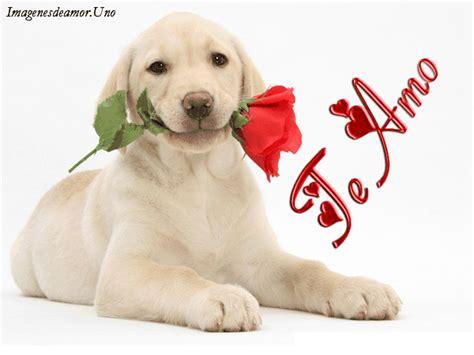 imagenes de perros animados con movimiento y frases imagenes de perros animados con movimiento y frases