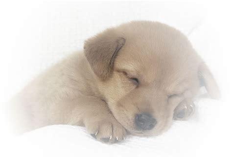 goldendoodle puppy wont stop biting my webstarts website