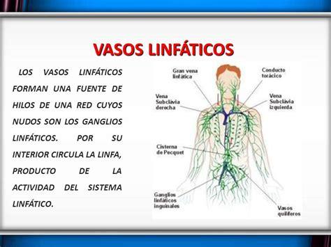 vaso linfatico sistema linfatico ppt descargar