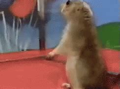 Dramatic Squirrel Meme - dramatic chipmunk gif funny viral discover share gifs