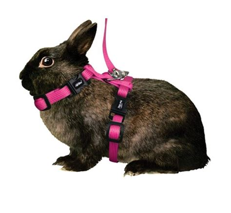 small harness bunny with harness bunny get free image about wiring diagram