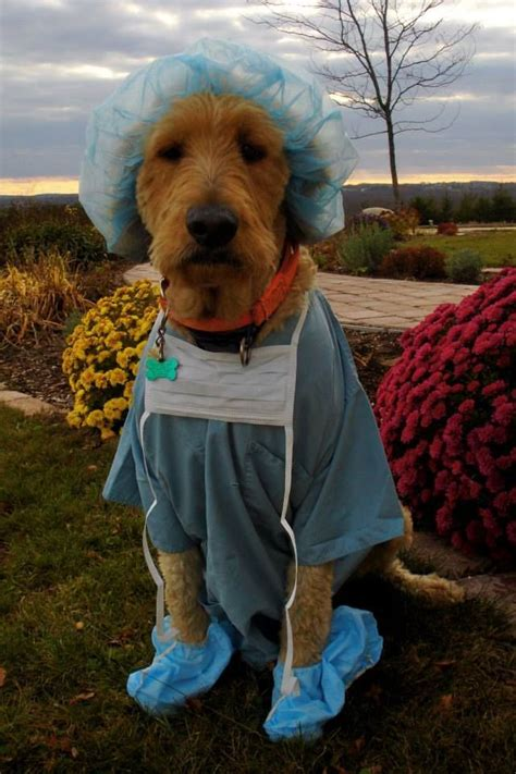 Dress It Up Button Puppy Parade 43 best images about easter parade on dress up weenie dogs and