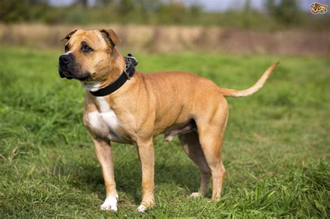 doge type of or not what breeds and types are changing in popularity in the uk pets4homes