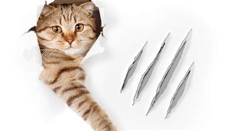 In The Claws Of The Cat cat torn out claw treatment animals me