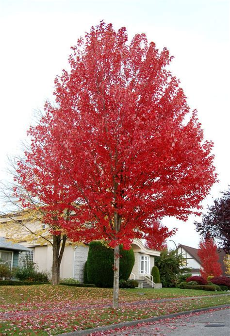 big trees 4u select your tree