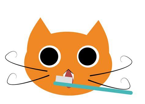 Lu Di Kandang Kucing fairyley story indonesia ruang dandan kucing