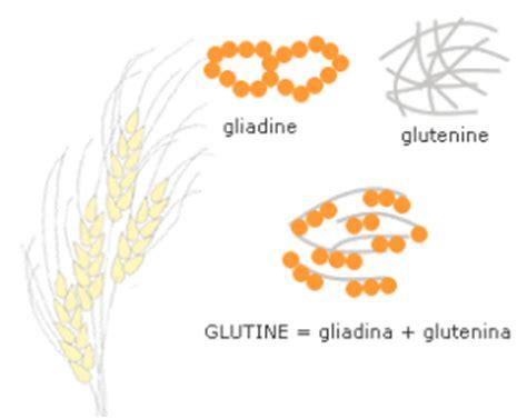 glutine negli alimenti pasta secca senza glutine pt 1 ingredienti farine e