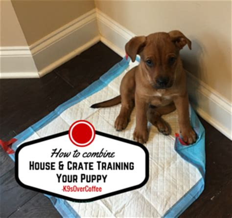 how to crate my puppy house and crate your puppy